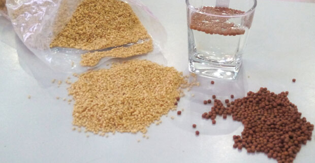 Secret for a Successful Fish Feed Formulation for Profitable Fish Farming Business (Part 1)