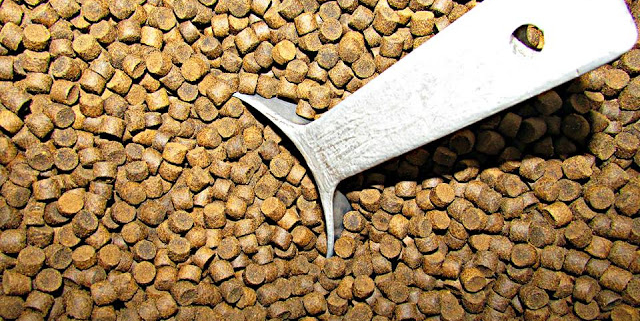 Secret for a Successful Fish Feed Formulation for Profitable Fish Farming Business (Part 2)